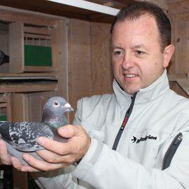 Alfred Berger mit einer Brieftaube im Taubenschlag