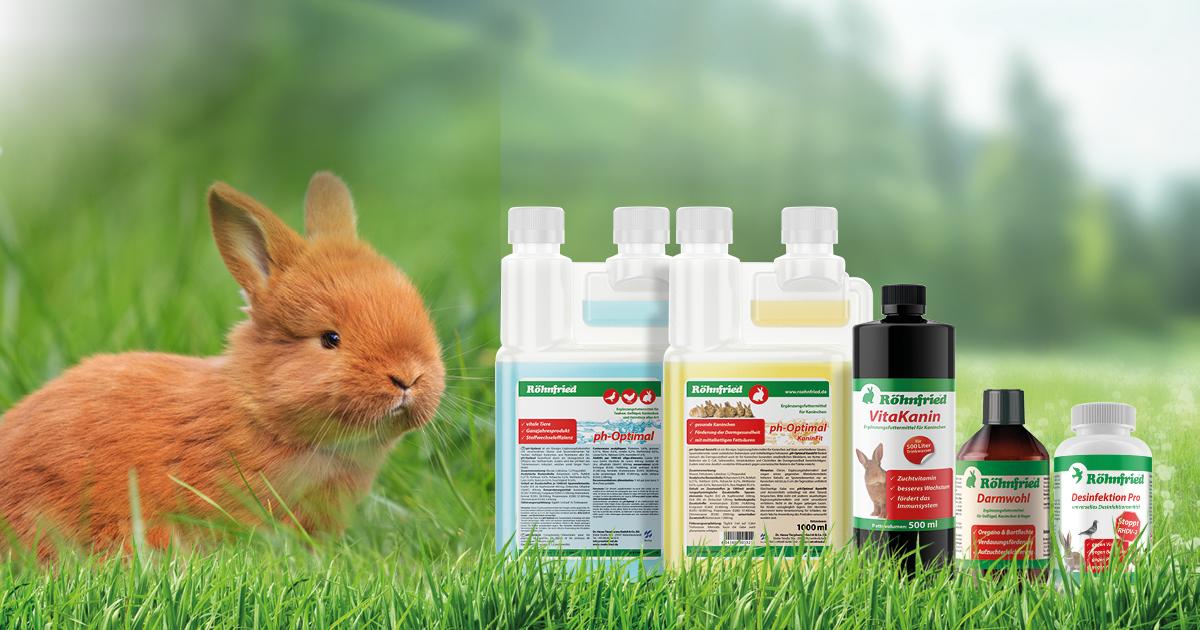 Kaninchenschnupfen, Enterocolitis, Myxomatose, RHDV-2, Desinfektion, Immunsystem stärken