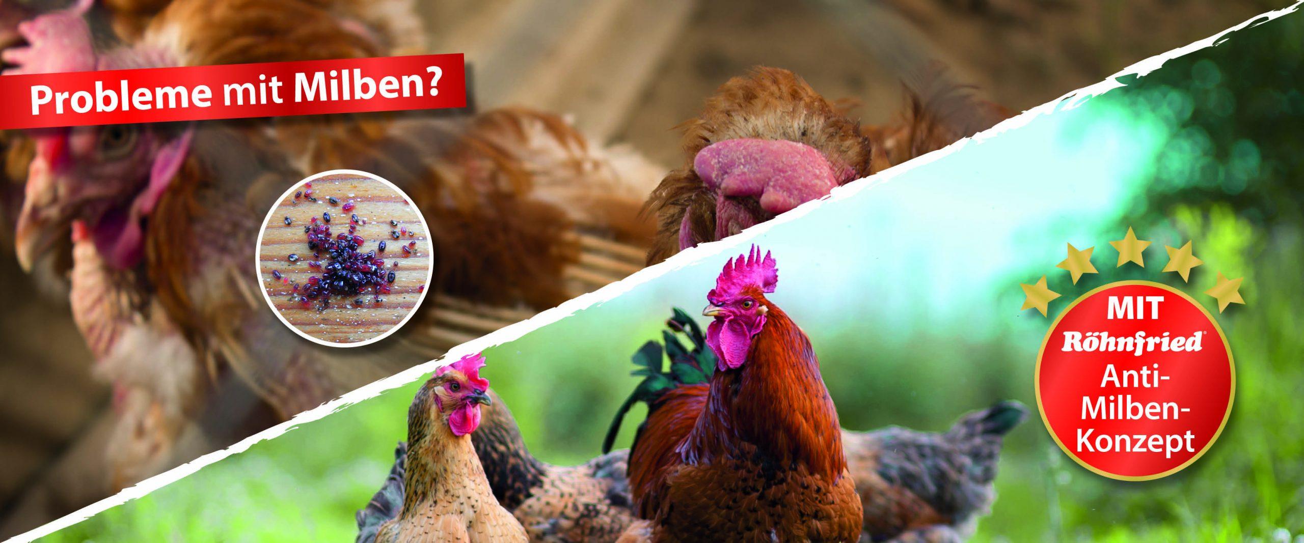 Hühner-Milben-erfolgreich-behandeln