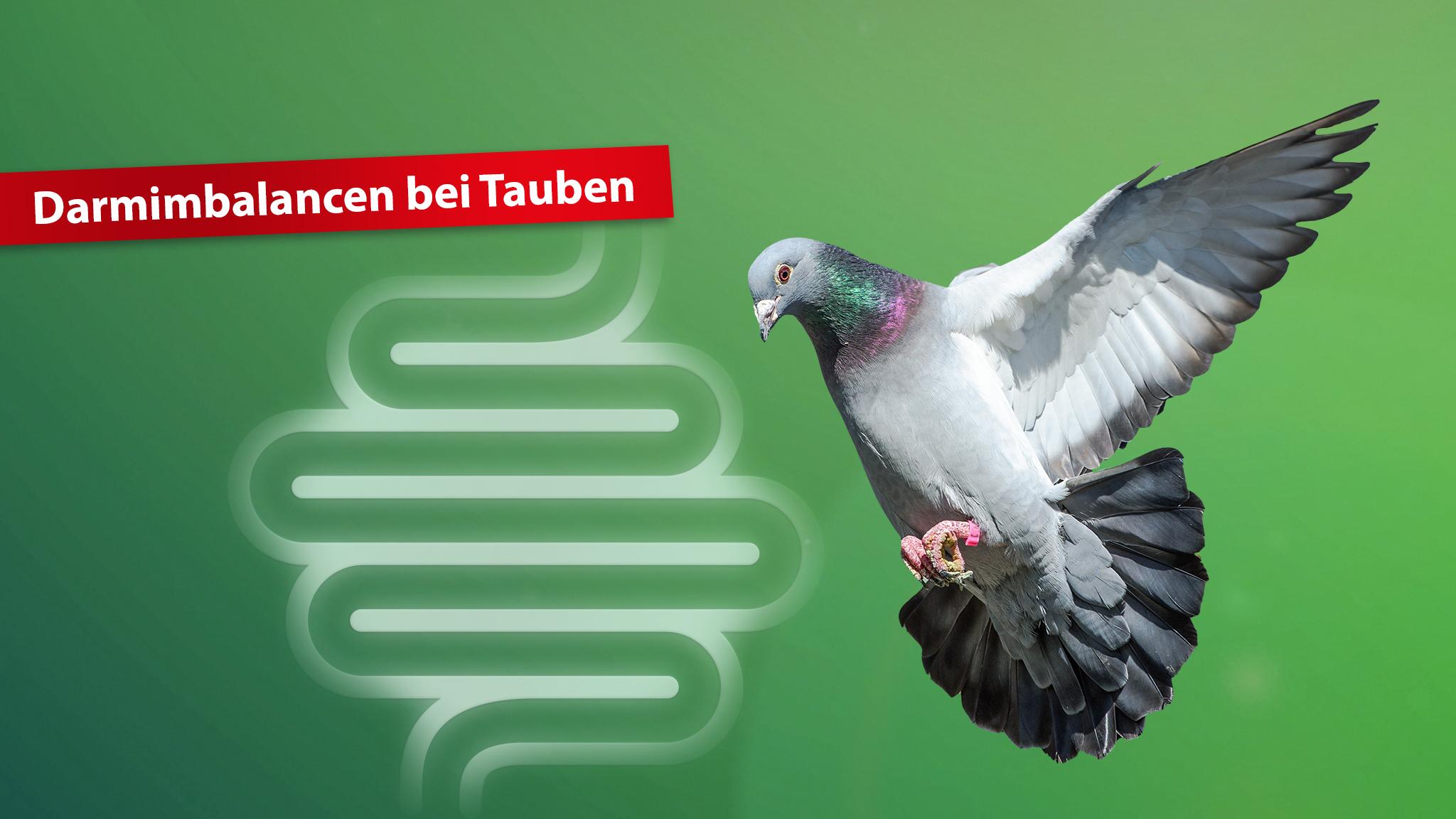 Darmgesundheit-Tauben-Röhnfried