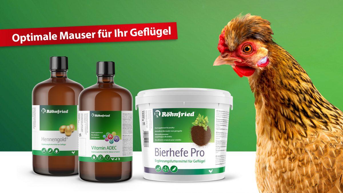 Röhnfried-Mauser-Rassegeflügel-Hühner