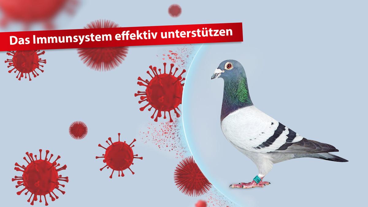 Das-Immunsystem-effektiv-unterstützen